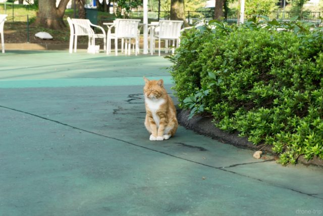 西武球場前駅のネコ