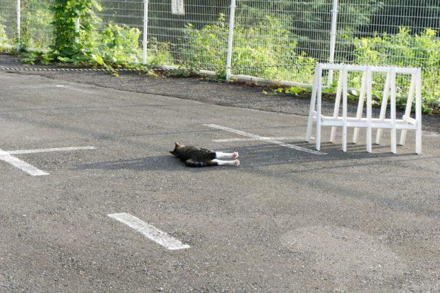 狭山湖近くのネコ